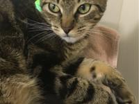 My name is Tippy and I am a one-year-old female. I need