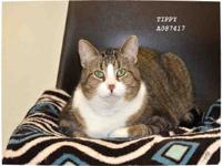 Hi, my name is Tibby! I am a big girl just full to the