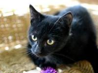 Tippy's story Meet Tippy! She is a sweet, affectionate,