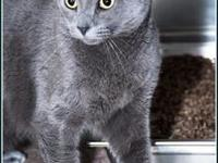 TIPPY's story $97.50 FEE INCLUDES: neutering/spaying,