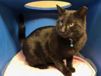 Titan is a handsome black cat. He is playful and very
