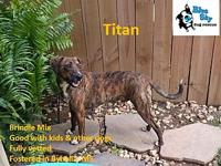 Titan's story Titan is a super sweet, gentle guy! He