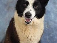 My story Titan is a 4-5 yr old Collie mix. What a happy
