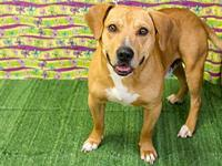 Tito's story Adoption fee for dogs is $95.00 which