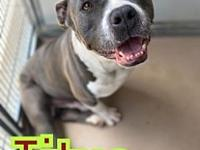 My story Titus is a 2-3 year old Pit Bull. He is loose,