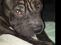 Titus's story Titus is looking for his furever family!