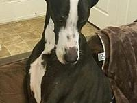 Titus's story For more information about this Dane,