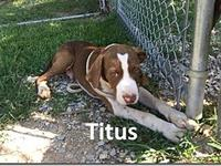 Titus's story Titus is available for adoption through