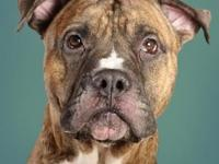 Titus's story Hiya! My name is Titus and I am sweet,
