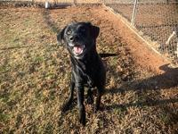 My story Titus is a playful and obedient dog! He knows