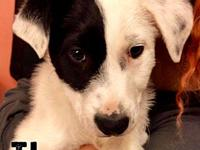TJ's story 3 mo  Male  Collie mix  dog friendly, kid