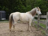 Horses-Gaited. Geldings. One 12 yo registered Tn