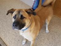 Toby is about 90 lb Akita mix who was transferred to us