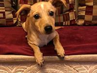 Toby's story Meet Toby! We are guessing he a Chihuahua