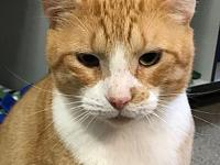 Toby's story I am a handsome male looking to go home
