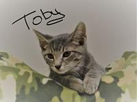 Toby's story Toby is playful and energetic like all