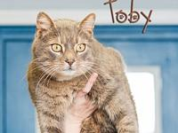 Toby's story Toby's owner recently went into a nursing