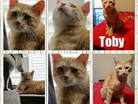 Toby's story Toby was at an animal control that was at