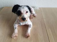 Toby's story Hi, my name is Toby! I am a sweet and