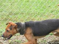 Toby's story TOBY SHELTER BREED: HOUND MIX MALE, 1.5