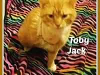 TOBY JACK's story Isn't he a beautiful kitty? Toby Jack