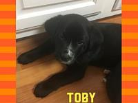 Toby's story Toby is 9 weeks old and will be ready for