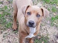 Toby's story Toby is a sweet young dog in search of a
