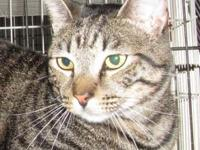 TODD's story Meet Todd, a black and bronze tabby male