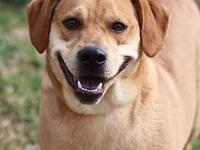 TODD's story MEET TODD! A 1-2 year old, male, American