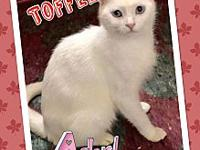 Toffee's story This beautiful 2 yr all white girl with