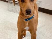 My story Hey, I am Togo! I am an active small 6 month