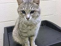 TOM's story Tom is a 3-year-old, a handsome boy with a