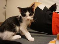 Tom Haverford's story Available for pre-adoption -