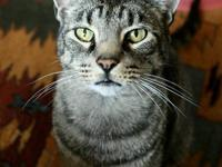 9 year old TomTom is very loveable and will ask to be