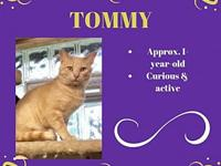 Tommy's story Meet Tommy! Tommy came to us last summer