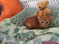 Tommy's story Tommy is a 9 week old kitten. He likes to