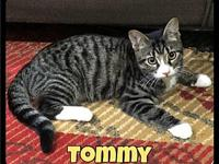 Tommy - Foster / 2018's story Tommy Harry and Tommy are