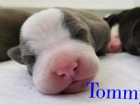 Welcome Tommy, one of the Rugrats - aka Mindy's babies!