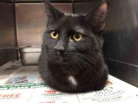 TOMMY's story Friendly and likes pets. Adopt Tommy at