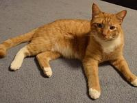 Tomtom's story Tomtom is four years old, rambunctious,