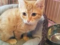 Tondy's story Meet Tondy! He loves to play and meow. He
