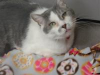 Hello! My name is Toni. I am a sweet 8 year old, front