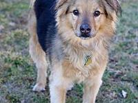 Toni's story Toni #9443 is a 7-year-old male, Shepherd