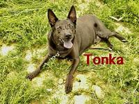Tonka's story Tonka is a loving 12 year old pup! We are