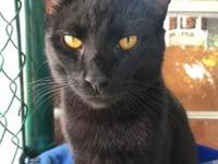My story Tonka is a handsome cat with his sleek black
