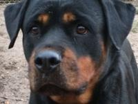 Tonka is a stunning, quiet 4 yr old girl who came to