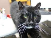 Tonny's story Tonny's adoption fee has been paid for by
