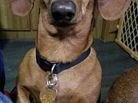 Tony's story If you are interested in meeting our dogs,