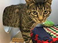 Tony's story Primary Color: Brown Tabby Weight: 8.4375