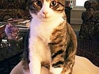 Tony's story Tony is a much-loved kitty who is in need